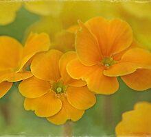 spring celebration by Teresa Pople
