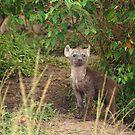 Baby Heyna - Masai Mara - Kenya by Charuhas  Images