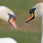 Swan Pair by GreyFeatherPhot