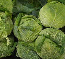 Cabbages by Tom  Reynen