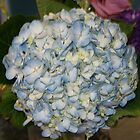 Hydrangea #1, La Mirada, CA USA by leih2008