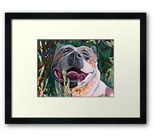 La Joie De Vivre Pit bull Enjoying Life Framed Print