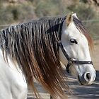 Andalusian Horse by SpainBuddy