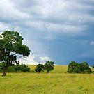 Maasai Mara National Reserve - Kenya by Charuhas  Images