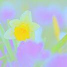 Daffodil In A Crocus Garden by pseth