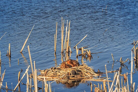 Island of love by Owed to Nature
