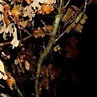 Beautiful Leaves by Brandon Harris