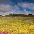 Pastoral Pastel by photosbyflood
