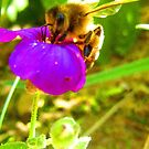 Bee on a flower by LeJour