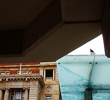 Vaguely A Lone Pigeon Stands Guard In The Rain Over All Of Australia by Robert Phillips
