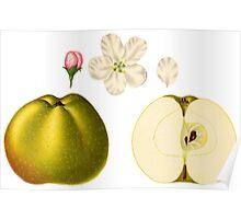 Apple Illustration Poster