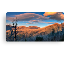 The Burnt Forest Canvas Print