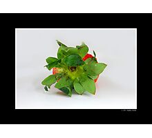 Fragaria x Ananassa - Strawberry Calyx Detail Photographic Print