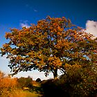 Autumn colours on a tree by the Towpath by Ralph Goldsmith