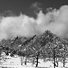 Snowy Trees And The Flatirons Boulder Colorado BW by Bo Insogna