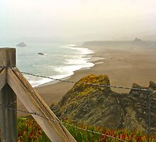 Beach Overlook by Barbara  Brown