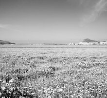 view of the Itoshima plain by parisiansamurai