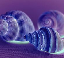 Sea Shells Off The Seashore by Tickleart