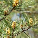spring in the pine forest 2 by parisiansamurai