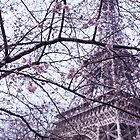 Eiffel Tower through blossom by MorganaPhoto