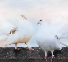 Dove Duo by missmoneypenny