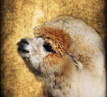 Goldy by jodi payne