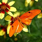Orange Butterfly by Dani Gee Phokus & [x]Pose
