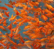 Plenty more in the sea... by Samantha Jones