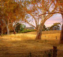 Dawsley II, Adelaide Hills SA by Mark Richards