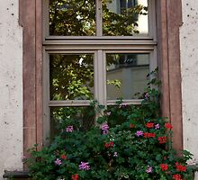 Window Box Reflections by phil decocco