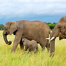 Family  by Charuhas  Images