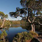 Pines by Wombat Pool by Chris Allen