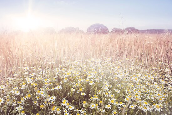 Sunshine over the Fields by Natalie Kinnear