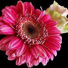 147-beauty flowers by elvira1