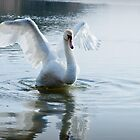 Swan Wings by Ralph Goldsmith
