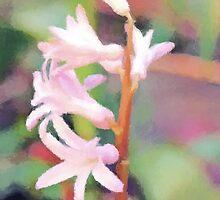 Backyard Flower by Mustafa Sural