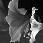 Ladies in Black and White by Eileen McVey