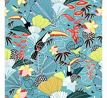 tropical birds Photographic Print