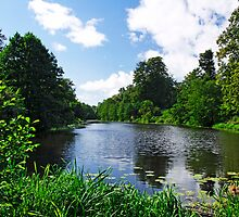 Along Mere Pond, Calke Park by Rod Johnson
