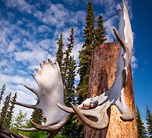 Antler Totem by Paul Wolf