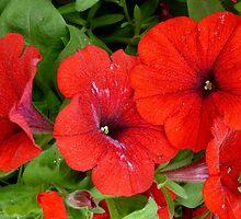 Really Red Petunias by WildestArt