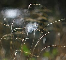 Grass with light and water by rennaisance