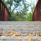Fall Over the Bridge by lindsycarranza