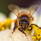 Honey Bee 2 by Jazzyjane