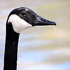 Portrait of a Goose by Lisa McIntyre