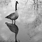 Goose in Black and White by Lisa McIntyre