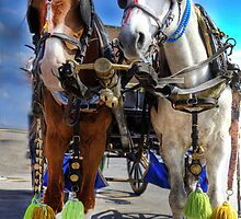 Horses in Turkey  by John44