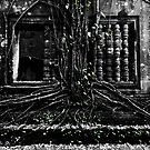 Entangled Walls, Cambodia by Michael Treloar
