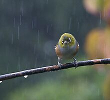 Raindrops keep falling on my head...........! by Roy  Massicks