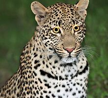 The Tutlwa leopard by jozi1